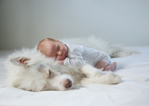 Sleeping Newborn With Dog | Baltimore, MD | Heartlove Photography